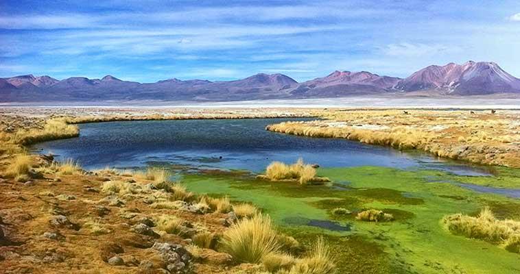 Evaluación biodiversidad altiplano Chile
